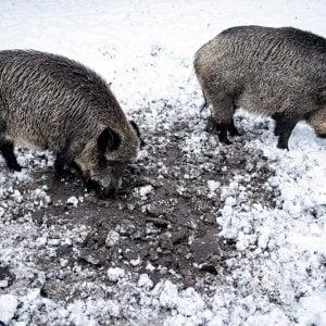 Emilia-Romagna, almeno 800 incidenti all'anno causati da animali selvatici