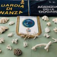 Come souvenir, coralli protetti: al Marconi di Bologna maximulta per due