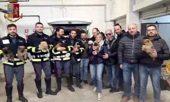 Rimini, scoperto traffico di migliaia di cani dalla Slovacchia