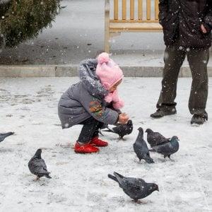 """""""Vietato dar da mangiare ai piccioni"""", a Imola multe fino a 500 euro"""