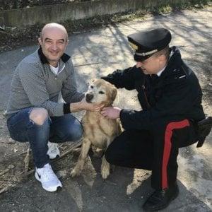 Imola, carabinieri salvano cane nel fosso da 5 ore