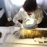 """La mummia restaurata """"in diretta"""" a Modena protagonista della mostra """"Storie d'Egitto"""""""