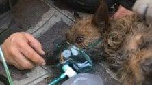 Il cagnolino salvato  con la maschera  dell'ossigeno  Foto