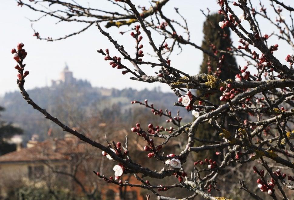 La meraviglia dei fiori: è già primavera a Bologna