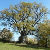 A Bologna quattromila alberi in più fatti crescere in tre anni