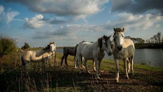 Ferrara, i cavalli abbandonati hanno trovato una nuova casa