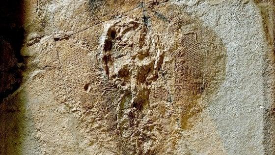 Ateneo di Bologna, le uova fossili di razza di mare dai 50 milioni di anni
