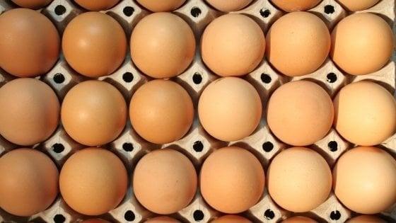 Ravenna, i Nas sequestrano 140mila uova
