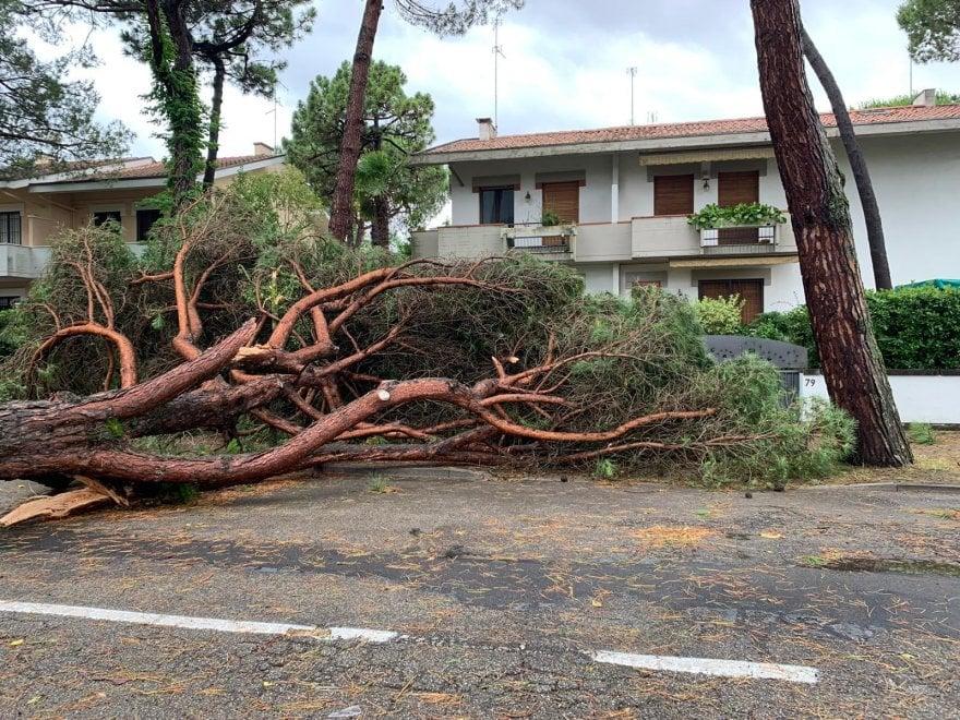 Maltempo, tromba d'aria a Milano Marittima fa strage di pini secolari