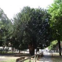 Bologna, il vecchio tasso di Villa Torchi sarà abbattuto