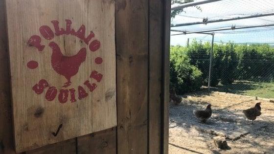 Adotta una gallina in cambio delle sue uova. A Bologna nasce il Pollaio sociale