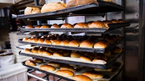 Bologna, l'app antispreco per comprare il pane (che costa tre volte meno)