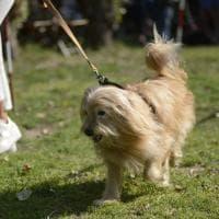 Caninfesta, a Bologna la sfilata dei quattrozampe