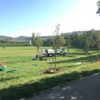 Cento nuovi alberi trovano casa a Bologna, nei parchi e nei giardini