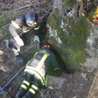 Appennino bolognese, due cani da caccia incastrati in una cava: i vigili del fuoco impegnati nel salvataggio