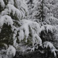 Emilia-Romagna, finalmente torna la neve. Ed è allerta gialla in collina