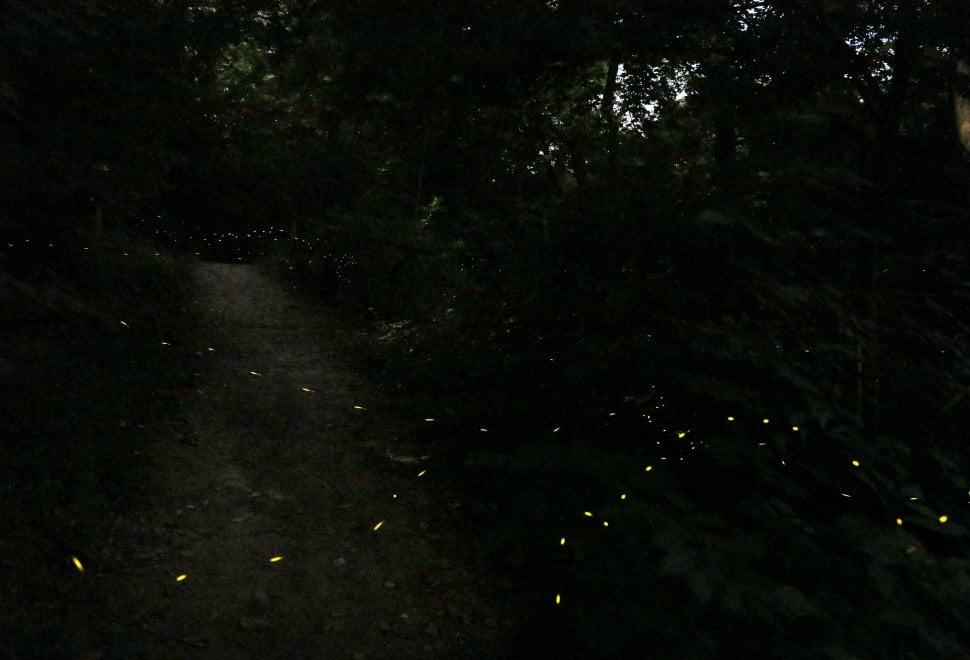 Bologna, la danza delle lucciole: fascino e poesia