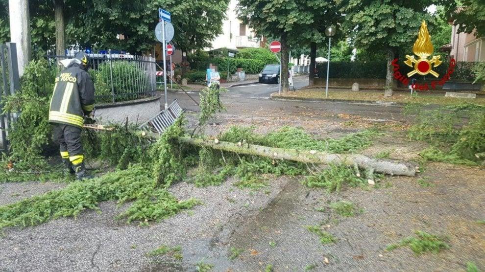 Alberi caduti e allagamenti per il maltempo nel Bolognese