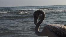 Un fenicottero sulla spiaggia di Riccione