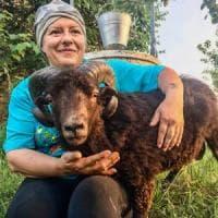 Il muflone in giardino e l'alpaca in salotto: boom di richieste nel Reggiano