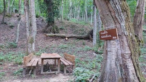 A lezione tra gli alberi. In Appennino a Bologna spunta l'aula nel bosco
