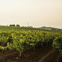 Torna Zola Jazz & Wine: musica nelle vigne