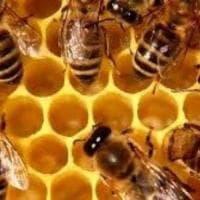 """Lo spettacolo delle api, """"spie"""" ambientali per lo smaltimento rifiuti nelle Marche"""