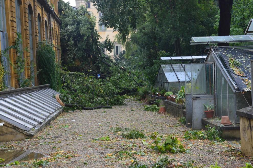 Grandine su firenze danni allorto botanico 1 di 4 firenze