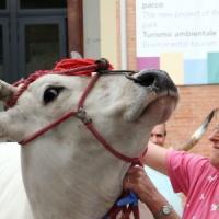 Record di visitatori per Expo Rurale: superati i 200mila