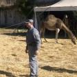 Il circo arriva a Semproniano