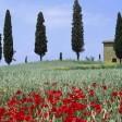 Toscana, quella linea rossa fra città e campagna