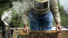 Bove, l'apicoltore dei boschi a teatro