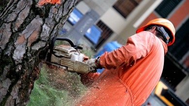 Piazza della Vittoria, 16 alberi da abbattere lavori iniziati, dureranno 10 giorni- Foto