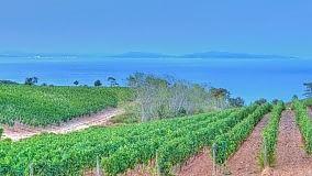 L'Isola dell'Elba e i suoi tesori    Vd/ Arrighi  -  Sapereta  -  Elba Magna     Archivio ristoranti -     Archivio vini