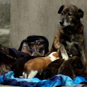 Chiedevano elemosina con cuccioli, che vendevano per pochi euro ai passanti