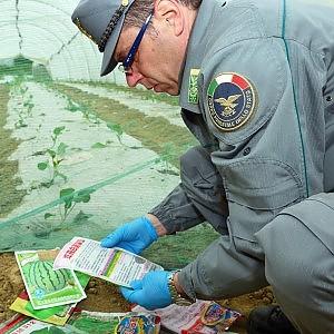 Orti cinesi, sequestrate sementi importate illegalmente nella Ue
