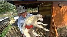 Le pecore come animali da compagnia