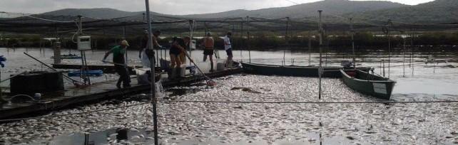 Orbetello, agonia laguna: 200 tonnellate  di pesci morti e 15 milioni di danni