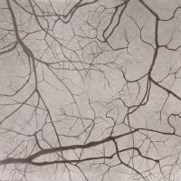 Gli alberi e i paesaggi di Massimo Turlinelli in mostra
