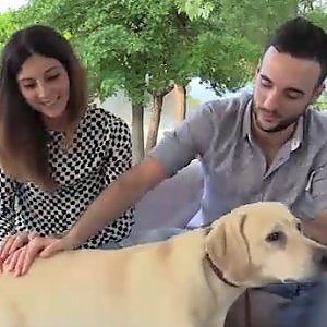 Chi è Ettore, il cane che chiede scusa diventato la star del web