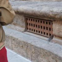 Firenze, un topo in via Tornabuoni crea scompiglio tra i turisti