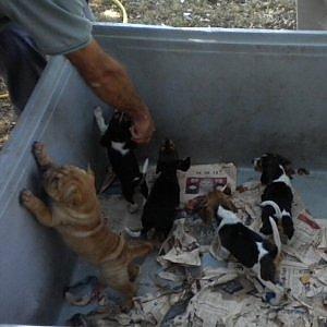 Traffico Di Cuccioli Appello Dei Veterinari Segnalateci I Collusi