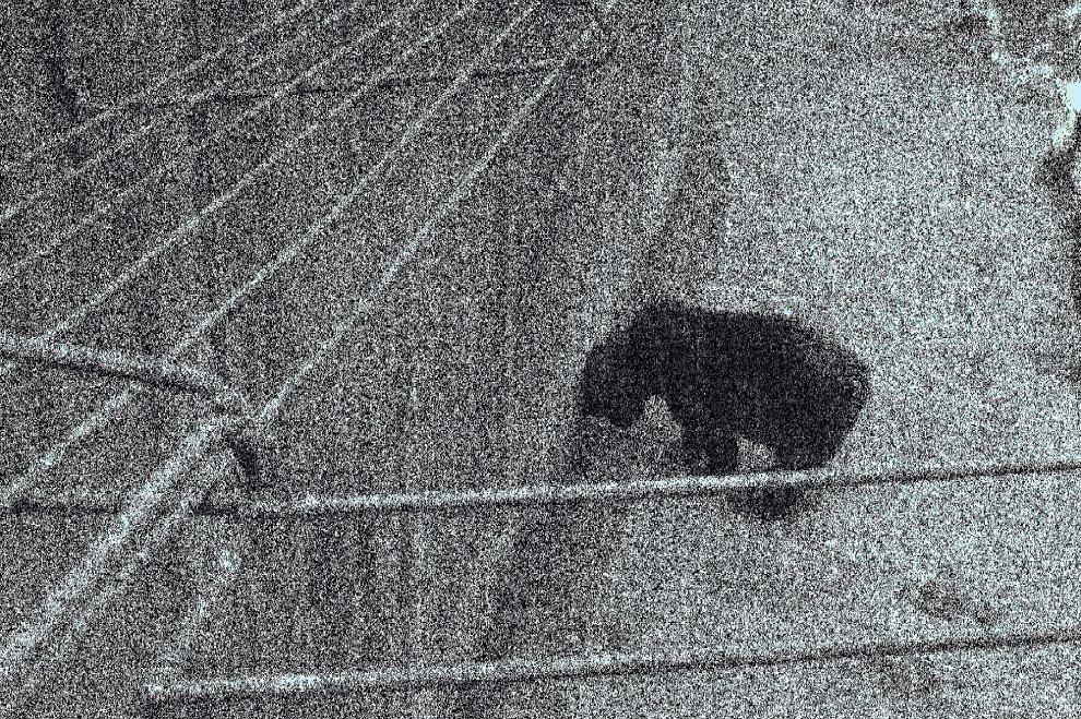 """Cavriglia (Arezzo) smantella l'ex """"zoo comunista"""": addio gabbie. Resta soltanto l'orso"""