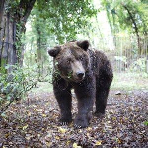 Addio all'ex zoo comunista, Cavriglia cerca casa per gli animali: resterà soltanto il compagno orso