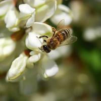 Firenze, emergenza api: oltre 200 chiamate ai vigili del fuoco
