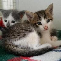 Quattro gattini appena nati abbandonati sull'A1: salvati