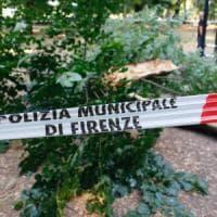 Firenze, crolla un albero di 12 metri nel Parco delle Cascine