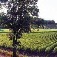 Chi investe nel vino va sul sicuro, boom di richieste per nuovi vigneti