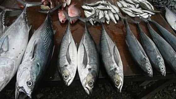 Firenze, 7 tonnellate di pesce in scatola regalate alla Caritas