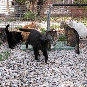 Raid nel gattile di follonica gatto ucciso a bastonate - Gattile bagno a ripoli firenze ...
